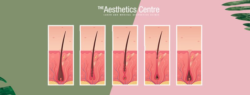 The-Aesthetics-Centre-Singapore-Laser Hair-Removal-Facts-Hair-Grow